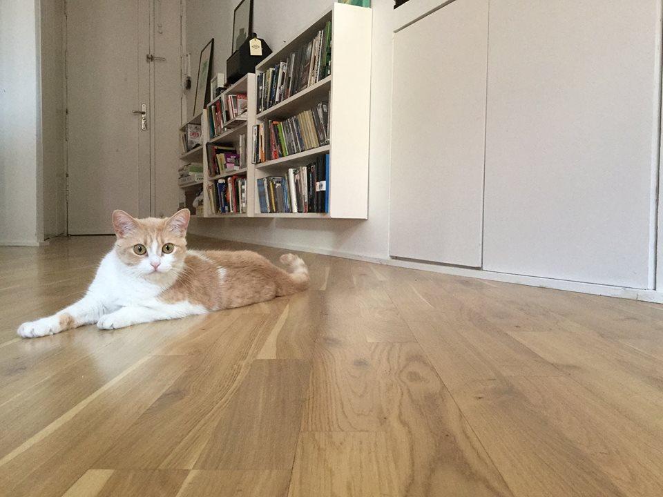 En mi casa no entra un gato (Pedro Zuazua Gil, 2018)