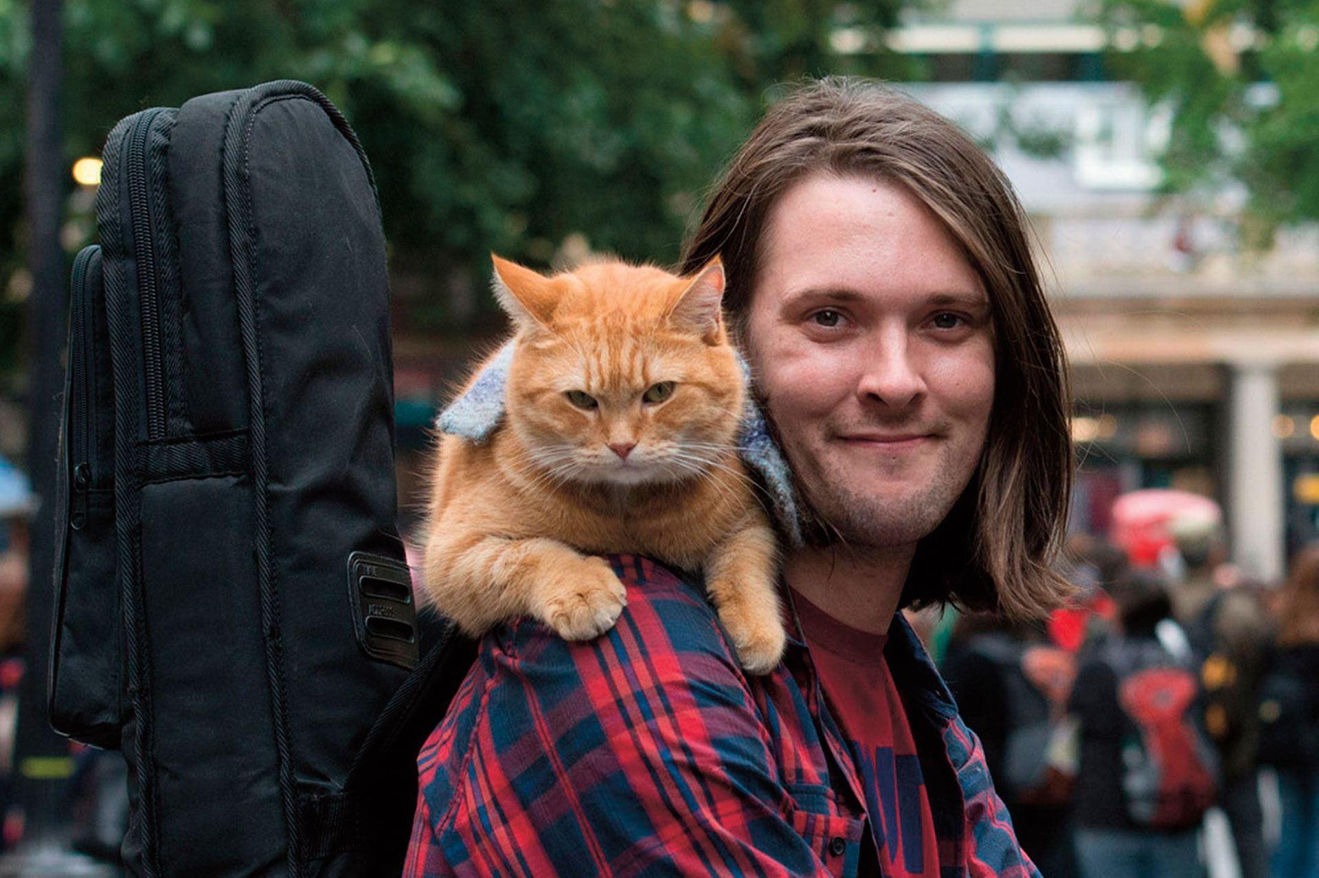 Los gatos van al cielo: el eterno Bob